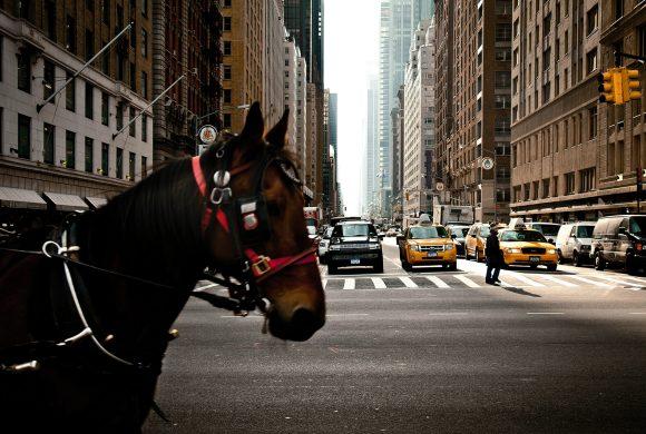 New York Reportage